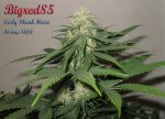 32_days_flower_Bigred85_ESH_1.jpg