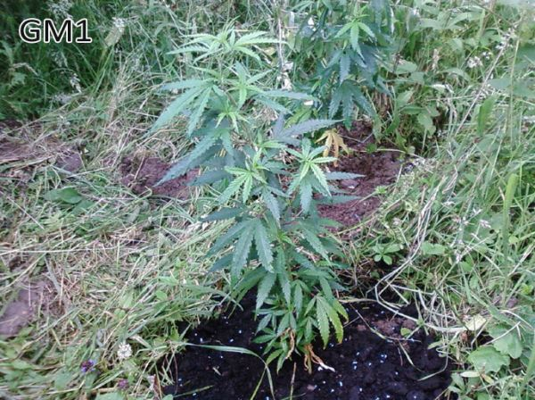5_days_outdoor_d