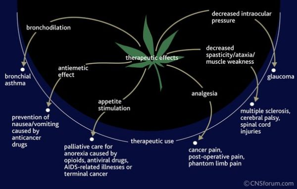 Marijuana Has Thereputic Effects On The Body