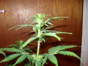 14_days_flower_008.JPG
