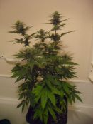 24_days_flower_013.JPG