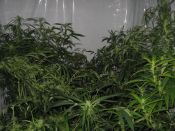 Black_Widow_7_weeks_12-12.jpg
