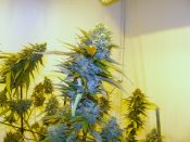 Casey_And_Psycodeisel_And_Blue_Chem-_Day40-Jan29.jpg