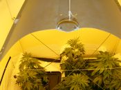 G13xHaze-_25BBizz_Grow-_75BBizz_Bloom-_March22.jpg