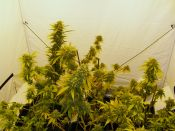 Growtent_V_Street-_No_Contest-_Day40-Jan29.jpg