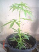 Homegrown_005_resize1.jpg