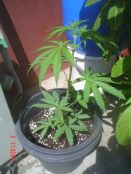 Homegrown_006_resize1.jpg