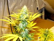 Indoor_Early_Haze-_2009.jpg