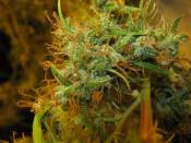 NHz_2_clone_14_weeks_12-12.jpg