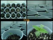 Ortega_Journal_Collage_Seedling_resize.jpg