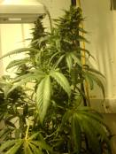 SoulshakerDay-17-Flower_28_March-07_018.jpg