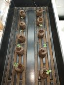 TLTx78PR_seedlings_8_days.jpg