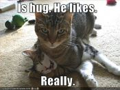 funny-pictures-cat-gives-hug.jpg