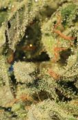 trichs_in_the_cave_703_x_1074_.jpg