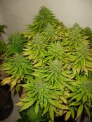 010310ElNino_B_bud.jpg