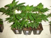 010910ElNino_C_Clones.jpg