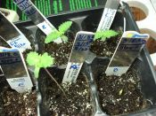 100109ElNino_Seedlings.jpg